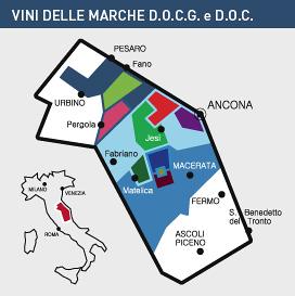 vini Marche