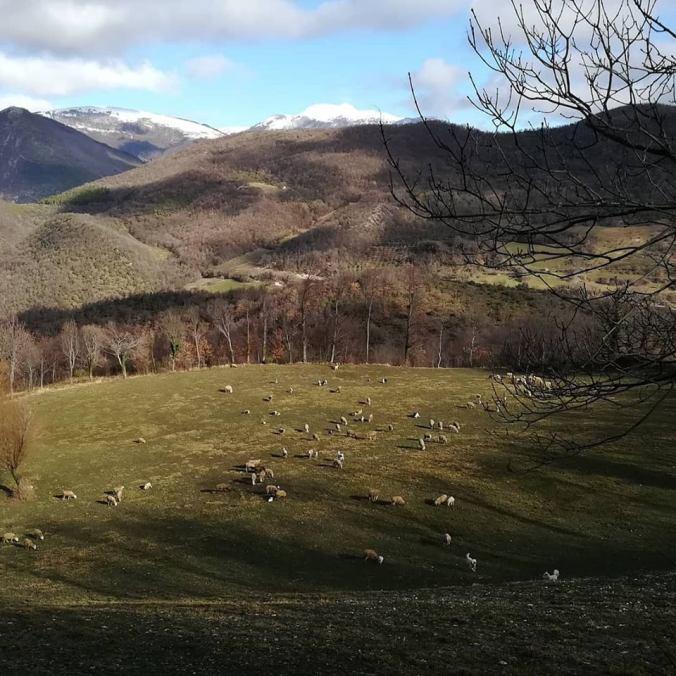 pecore Piaggiasecca
